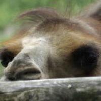 Bild zum Weblog Die Sehnsucht ohne Zaun zu leben