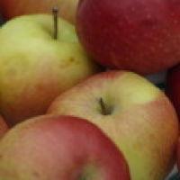 Bild zum Weblog Früchte