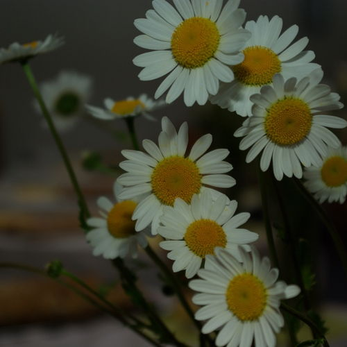 """Bild zum Weblog """"Wenn Gott die Blumenkinder schon so liebt ..."""""""