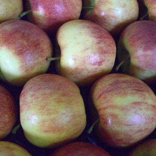Bild zum Weblog Leckere Äpfel unserer Gegend