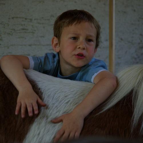 Bild zum Weblog Auf dem Rücken der Pferde ...