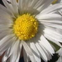 Bild zum Weblog Heißer Draht zum meteorologischen Dienst