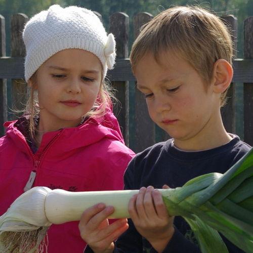 Bild zum Weblog Lernen am Bauernhof