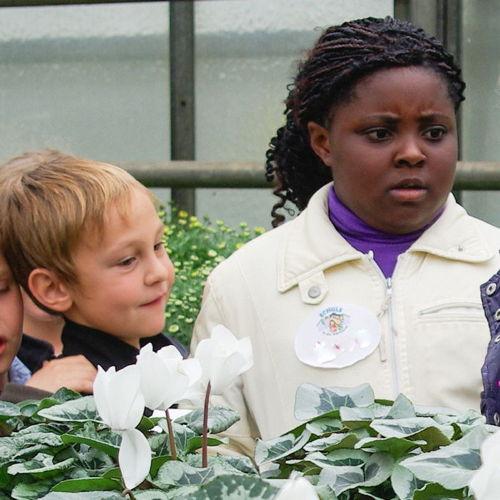Bild zum Weblog Schule in der Gärtnerei