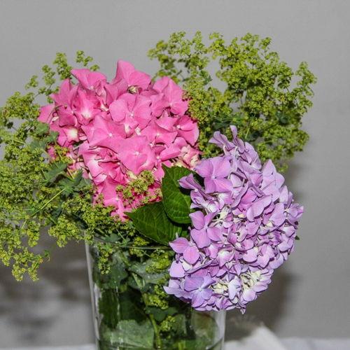 Bild zum Weblog Der schönste Garten ...