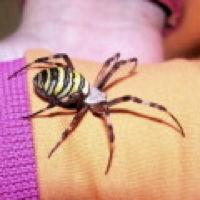 Bild zum Weblog Muss man vor Spinnen wirklich Angst haben?